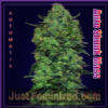 Advanced Auto Skunk Mass Female 3 Weed Seeds